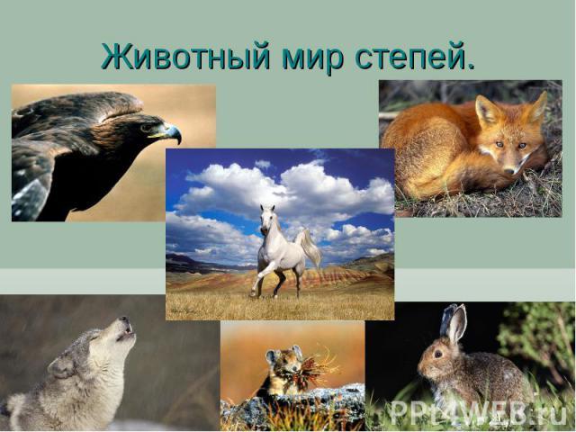 Животный мир степей.