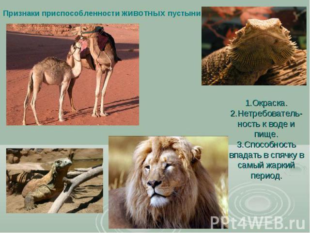 Признаки приспособленности животных пустыни 1.Окраска. 2.Нетребователь-ность к воде и пище. 3.Способность впадать в спячку в самый жаркий период.