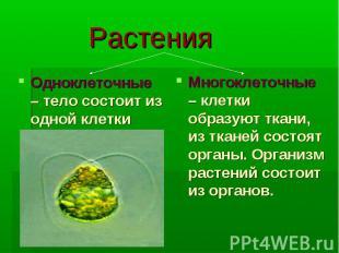 Растения Одноклеточные – тело состоит из одной клетки Многоклеточные – клетки об