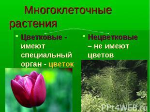 Многоклеточные растения Цветковые - имеют специальный орган - цветок Нецветковые