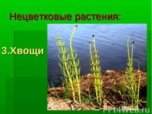 Нецветковые растения: 3.Хвощи