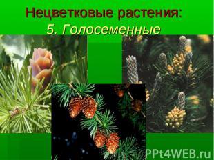 Нецветковые растения: 5. Голосеменные