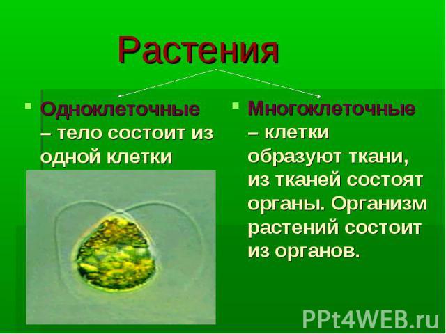 Растения Одноклеточные – тело состоит из одной клетки Многоклеточные – клетки образуют ткани, из тканей состоят органы. Организм растений состоит из органов.