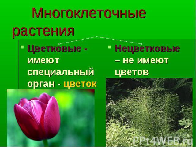 Многоклеточные растения Цветковые - имеют специальный орган - цветок Нецветковые – не имеют цветов