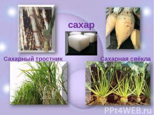 сахарСахарный тростник Сахарная свёкла