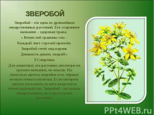 ЗВЕРОБОЙ Зверобой - это одно из древнейших лекарственных растений. Его старинное