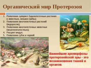 Органический мир Протерозоя Появление эукариот (одноклеточные растения и животны