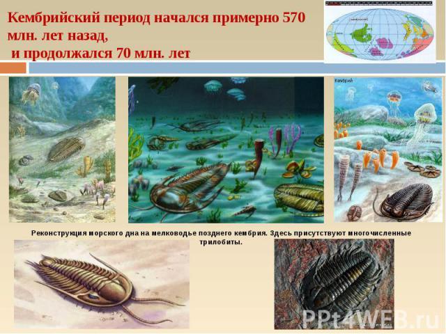 Кембрийский период начался примерно 570 млн. лет назад, и продолжался 70 млн. лет Реконструкция морского дна на мелководье позднего кембрия. Здесь присутствуют многочисленные трилобиты.