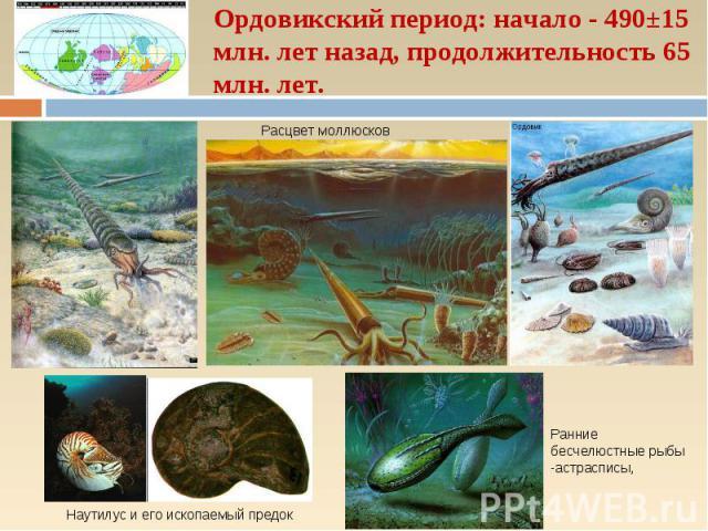 Ордовикский период: начало - 490±15 млн. лет назад, продолжительность 65 млн. лет. Ранние бесчелюстные рыбы -астрасписы, Наутилус и его ископаемый предок