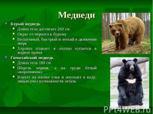 Медведи Бурый медведь Длина тела достигает 260 см Окрас от чёрного к бурому Бесш