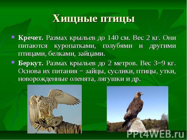 Хищные птицы Кречет. Размах крыльев до 140 см. Вес 2 кг. Они питаются куропатками, голубями и другими птицами, белками, зайцами. Беркут. Размах крыльев до 2 метров. Вес 3−9 кг. Основа их питания − зайцы, суслики, птицы, утки, новорожденные оленята, …