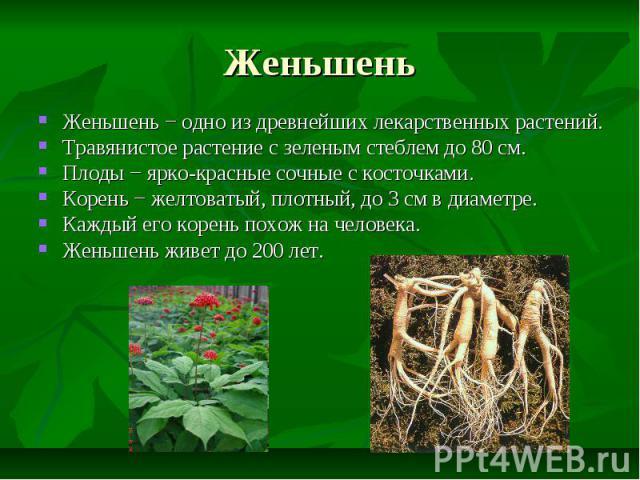 Женьшень Женьшень − одно из древнейших лекарственных растений. Травянистое растение с зеленым стеблем до 80 см. Плоды − ярко-красные сочные с косточками. Корень − желтоватый, плотный, до 3 см в диаметре. Каждый его корень похож на человека. Женьшень…