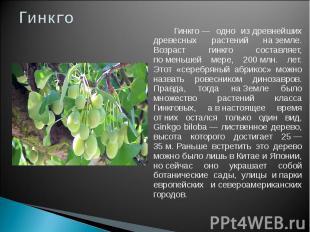 Гинкго Гинкго— одно издревнейших древесных растений наземле. Возраст гинкго с