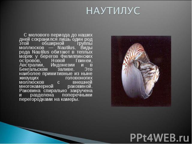 НАУТИЛУС С мелового периода до наших дней сохранился лишь один род этой обширной группы моллюсков — Nautilus. Виды рода Nautilus обитают в теплых морях у берегов Филиппинских островов, Новой Гвинеи, Австралии, Индонезии и в Бенгальском заливе. Это н…