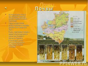 Почвы На территории области преобладают типичные, южные и выщелоченные чернозёмы