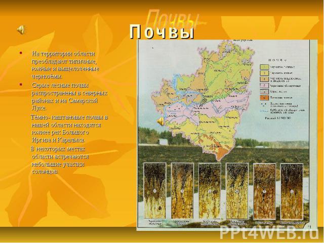 Почвы На территории области преобладают типичные, южные и выщелоченные чернозёмы. Серые лесные почвы распространены в северных районах и на Самарской Луке. Тёмно- каштановые почвы в нашей области находятся южнее рек Большого Иргиза и Каралыка. В нек…