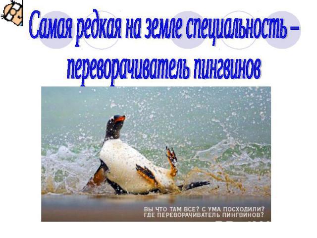 Самая редкая на земле специальность – переворачиватель пингвинов