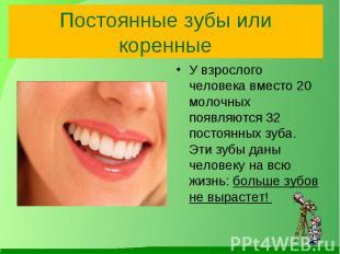 Постоянные зубы или коренные У взрослого человека вместо 20 молочных появляются