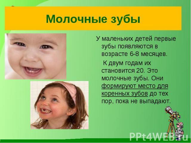 Молочные зубы У маленьких детей первые зубы появляются в возрасте 6-8 месяцев. К двум годам их становится 20. Это молочные зубы. Они формируют место для коренных зубов до тех пор, пока не выпадают.