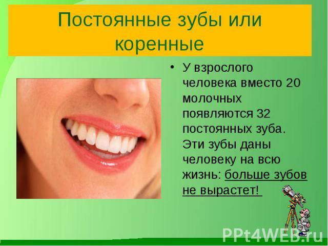 Постоянные зубы или коренные У взрослого человека вместо 20 молочных появляются 32 постоянных зуба. Эти зубы даны человеку на всю жизнь: больше зубов не вырастет!