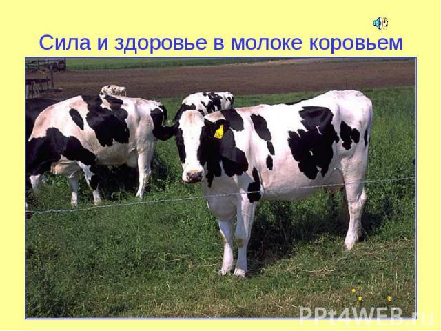 Сила и здоровье в молоке коровьем