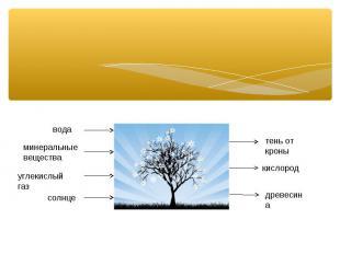 вода минеральные вещества углекислый газ солнце тень от кроны кислород древесина