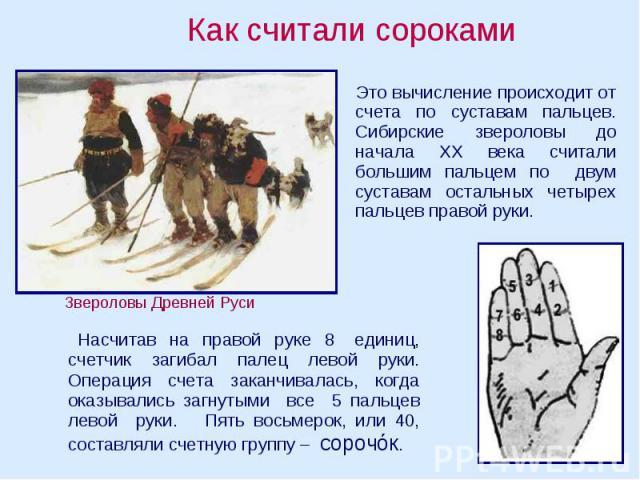 Как считали сороками Это вычисление происходит от счета по суставам пальцев. Сибирские звероловы до начала ХХ века считали большим пальцем по двум суставам остальных четырех пальцев правой руки. Насчитав на правой руке 8 единиц, счетчик загибал пале…