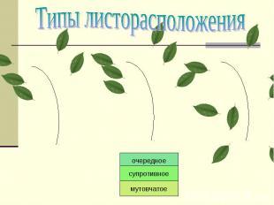 Типы листорасположения