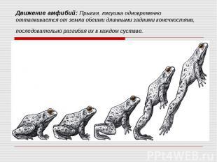 Движение амфибий: Прыгая, лягушка одновременно отталкивается от земли обеими дли