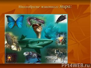 Многообразие животного мира: