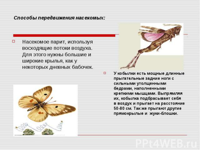 Способы передвижения насекомых:Насекомое парит, используя восходящие потоки воздуха. Для этого нужны большие и широкие крылья, как у некоторых дневных бабочек. У кобылки есть мощные длинные прыгательные задние ноги с сильными утолщенными бедрами, на…
