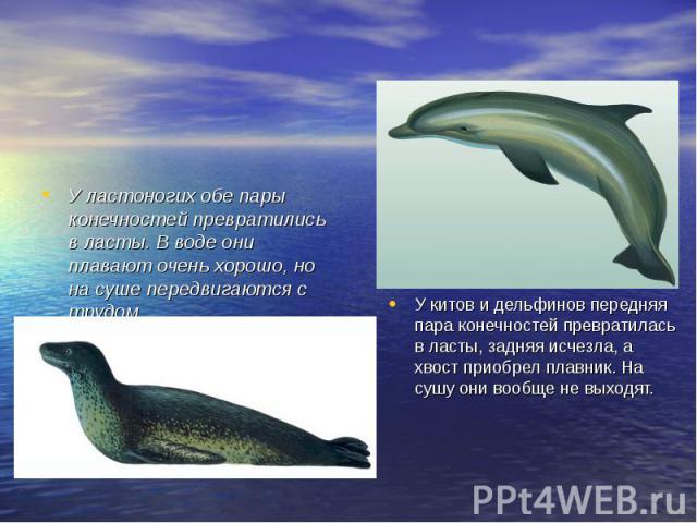 У ластоногих обе пары конечностей превратились в ласты. В воде они плавают очень хорошо, но на суше передвигаются с трудом. У китов и дельфинов передняя пара конечностей превратилась в ласты, задняя исчезла, а хвост приобрел плавник. На сушу они воо…