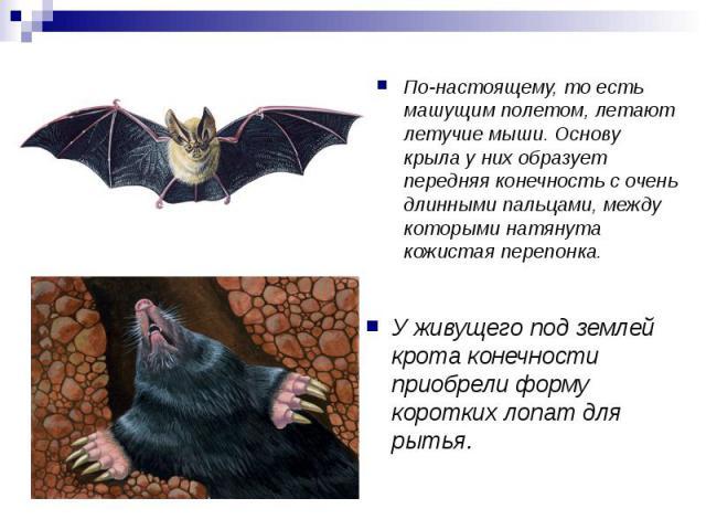 По-настоящему, то есть машущим полетом, летают летучие мыши. Основу крыла у них образует передняя конечность с очень длинными пальцами, между которыми натянута кожистая перепонка. У живущего под землей крота конечности приобрели форму коротких лопат…