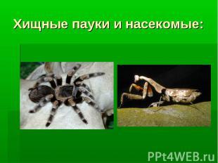 Хищные пауки и насекомые: