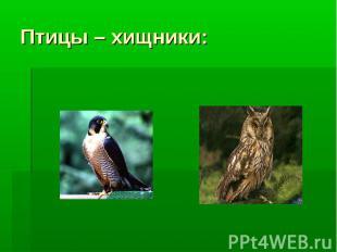Птицы – хищники: