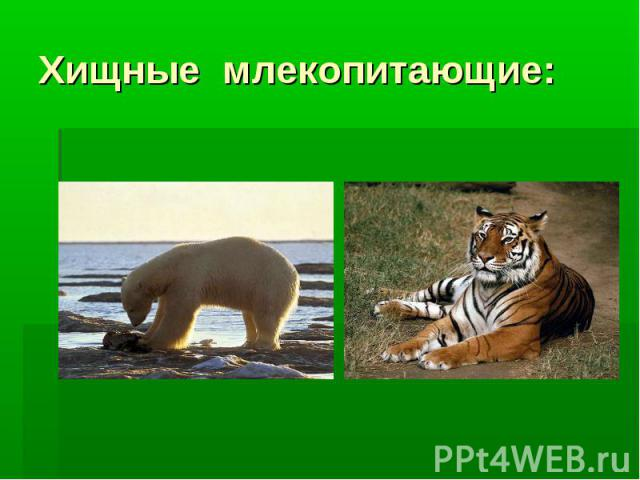 Хищные млекопитающие:
