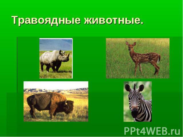 Травоядные животные.