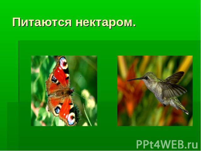 Питаются нектаром.