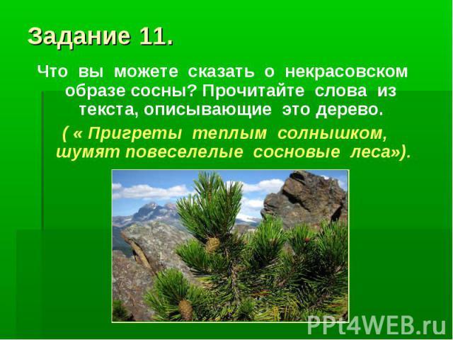 Задание 11.Что вы можете сказать о некрасовском образе сосны? Прочитайте слова из текста, описывающие это дерево. ( « Пригреты теплым солнышком, шумят повеселелые сосновые леса»).
