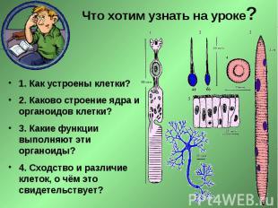 Что хотим узнать на уроке? 1. Как устроены клетки? 2. Каково строение ядра и орг