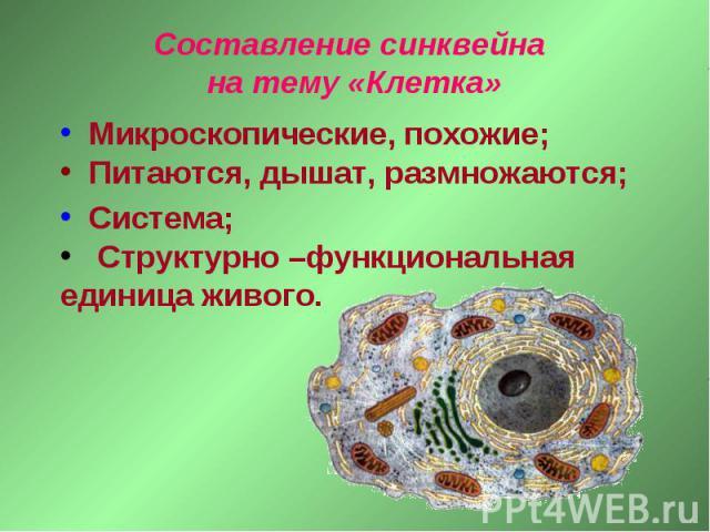 Составление синквейна на тему «Клетка» Микроскопические, похожие; Питаются, дышат, размножаются; Система; Структурно –функциональная единица живого.