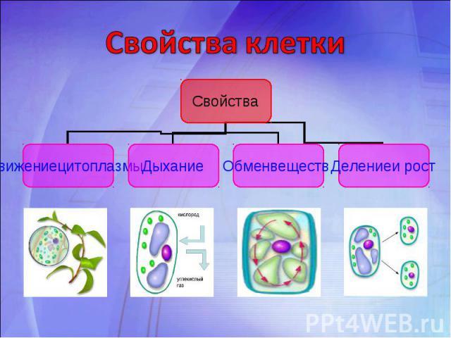Свойства клетки