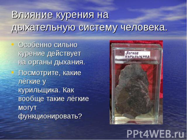 Влияние курения на дыхательную систему человека. Особенно сильно курение действует на органы дыхания. Посмотрите, какие лёгкие у курильщика. Как вообще такие лёгкие могут функционировать?