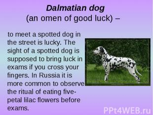 Dalmatian dog (an omen of good luck) – to meet a spotted dog in the street is lu
