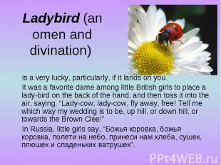 Ladybird (an omen and divination) is a very lucky, particularly, if it lands on