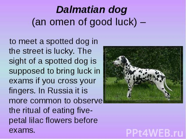 Dalmatian dog (an omen of good luck) – to meet a spotted dog in the street is lucky. The sight of a spotted dog is supposed to bring luck in exams if you cross your fingers. In Russia it is more common to observe the ritual of eating five-petal lila…