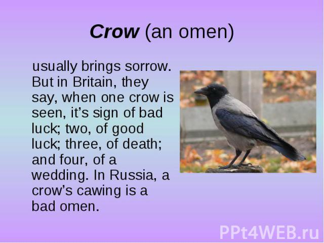 Crow (an omen)usually brings sorrow. But in Britain, they say, when one crow is seen, it's sign of bad luck; two, of good luck; three, of death; and four, of a wedding. In Russia, a crow's cawing is a bad omen.