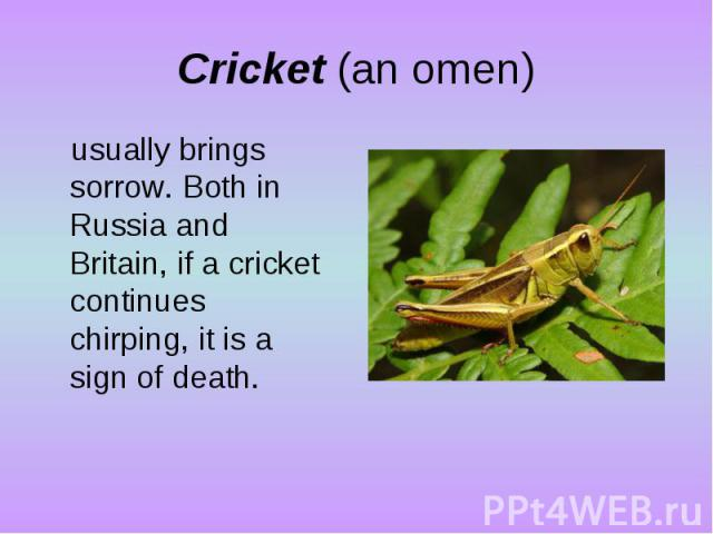 Cricket (an omen)usually brings sorrow. Both in Russia and Britain, if a cricket continues chirping, it is a sign of death.
