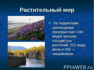 Растительный мир На территории заповедника произрастают 430 видов высших сосудис