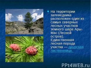 На территории заповедника расположен один из самых северных лесных участков земн